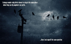 Popular Birds Quotes and Sayings