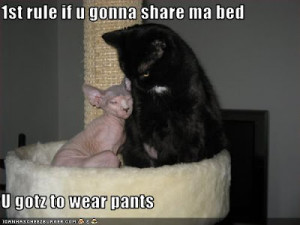 Visit our funny dog and cat picture and video gallery.