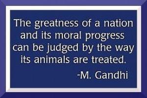 animal cruelty animals gandhi quote
