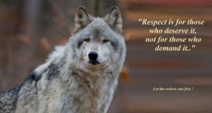 wolf sayings