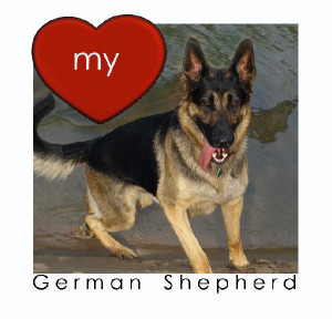 Click to preview LOVE my German Shepherd photo book