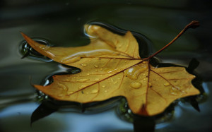 Leaves floating on water symbolize a feeling of peace, perhaps the ...