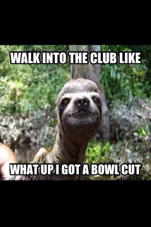 sloth... just flipping funny lol