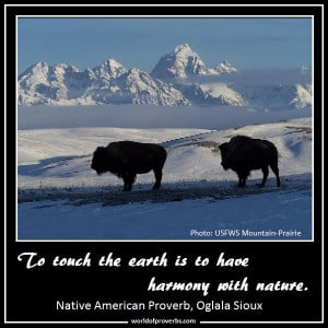 Native American Proverb, Oglala Sioux [19076]