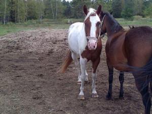 Photo Cheval Race Paint Horse