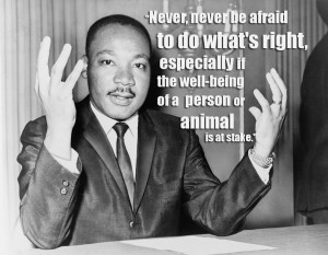 Animal Abuse Quotes By Famous People Quote mlk