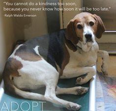 ... quote #health #animals #dog #dogs #adopt #adoption #pets #beagle