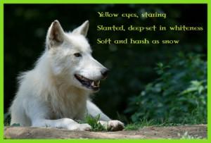 wolf poem - friendship, white, grey wolf, wild animal black, quotes ...