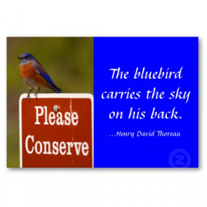 Puget Sound Bluebird Recovery Project