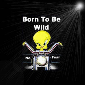 Born Wild Funny Quotes Quote Lol Tweety