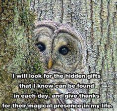 al anon more life anon quotes hidden gift al anon owls stuff ...