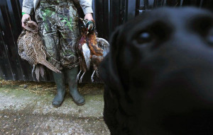 beater holds dead pheasants after a hunt in Lewknor, southern ...