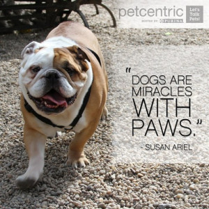 inspirational quotes? Visit our Pinterest page for more pet quotes ...