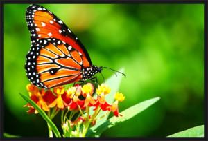 브라질에서 나비가 날개짓을 하면, 그것이 미국의 ...