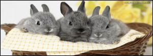 pet-pets-rabbit-rabbits-fuzzy-animal-animals-cute-adorable-family ...