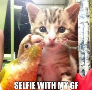 Best MEME 2014 Selfies