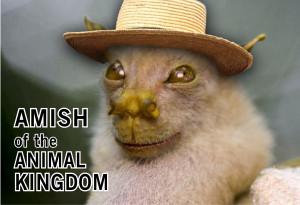 ... Animals, Sayings, Amish, Fruit Bats, Bearded, bat, cute animals baby