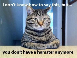 View All - Funny Animal Pictures With Captions - Very Funny Cats - ...
