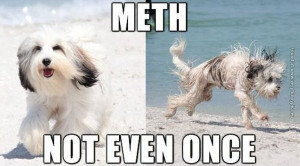 funny pictures meth dog not even once