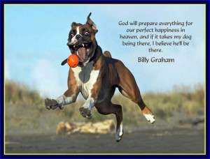 billy graham quotes on dogs