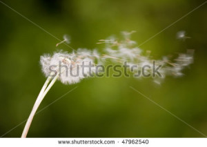 Dandelions Blowing In The Wind Background Dandelion blowing into wind ...