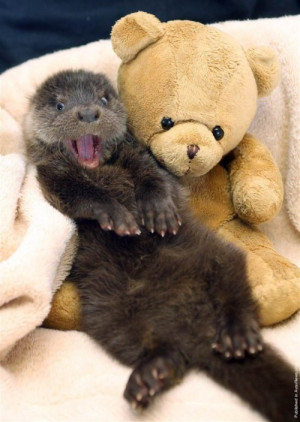 animals cute happy smiling otter