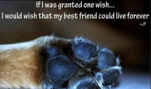 ... Granted One Wish, I Would Wish That My Best Friend Could Live Forever