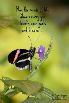 ... and dreams... #butterfly #quote #inspiration Photo © Virginia Higgins