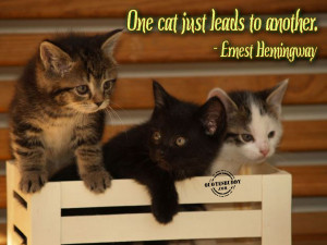 Lol Cats quotes funny pictures, images and photos