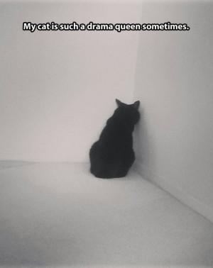 funnypictures-cat-drama-queen