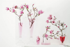 Cherry Blossoms and Wall Stencils