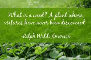 gardening quotes plants vs weeds