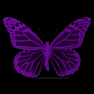 ... Purple, Purple Butterflies, Animated Purple'S Butterflies, Purple