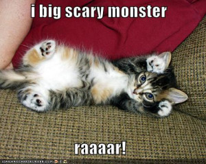 funny pictures cute fierce image photo picture