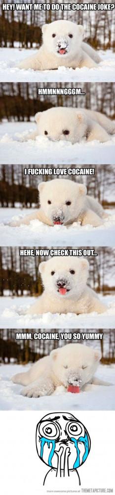 funny cute polar bear snow