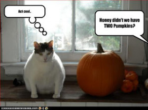 Wow that cat really does look like a pumpkin, most likely from eating ...