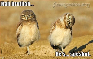 Funny Owl Twin Brothers – Funny Animals – Funny Picture