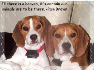 Cute, love, quote, pam brown, dog, beagle, animal, sweet wallpaper