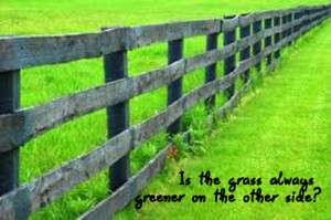 Caturday Reflection – Is the Grass Always Greener on the Other Side?