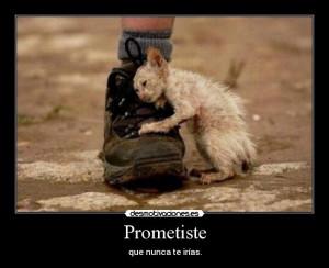 carteles gatos tiernos tristes desmotivaciones