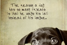 Animal Quotes / by Malibu Vet Clinic