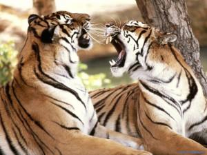 wild animal photos