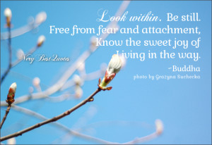 Buddha quotes, look within quotes, be still quotes, free from ...
