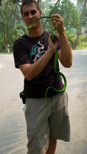 Thread: Asian vine snake @ dinner