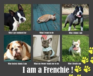 Funny French Bulldog Pictures With Captions One especially funny ...