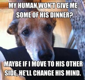 Every dog thinks this makes perfect sense…