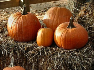 Fall Celebrations--How to Throw a Harvest Party
