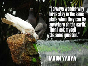 Cute birds quotes images for facebook 1 1d0fc5ea