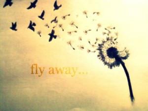 bird, birds, dandelion, drawing, flower, fly, free, freedom, pretty ...