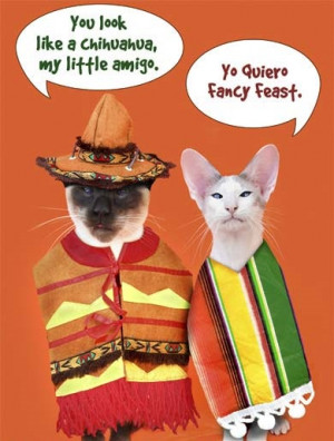 Cinco De Mayo Funny Pictures, Quotes, Sayings, Facebook Status
